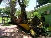 Orkanskadad buss i botanical gardens, Roseau