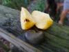 Pistachnöt! Och pistachfrukten som nöten växer ovanpå, det hade man ju full koll på.