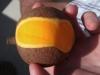 Mangobeta