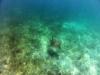 Havssköldpaddor, Tobago Cays