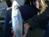 Tonfisk och bucktailjigg
