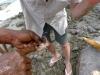 Handplockad bläckfisk