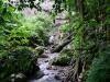 Med Buddah i djungeln