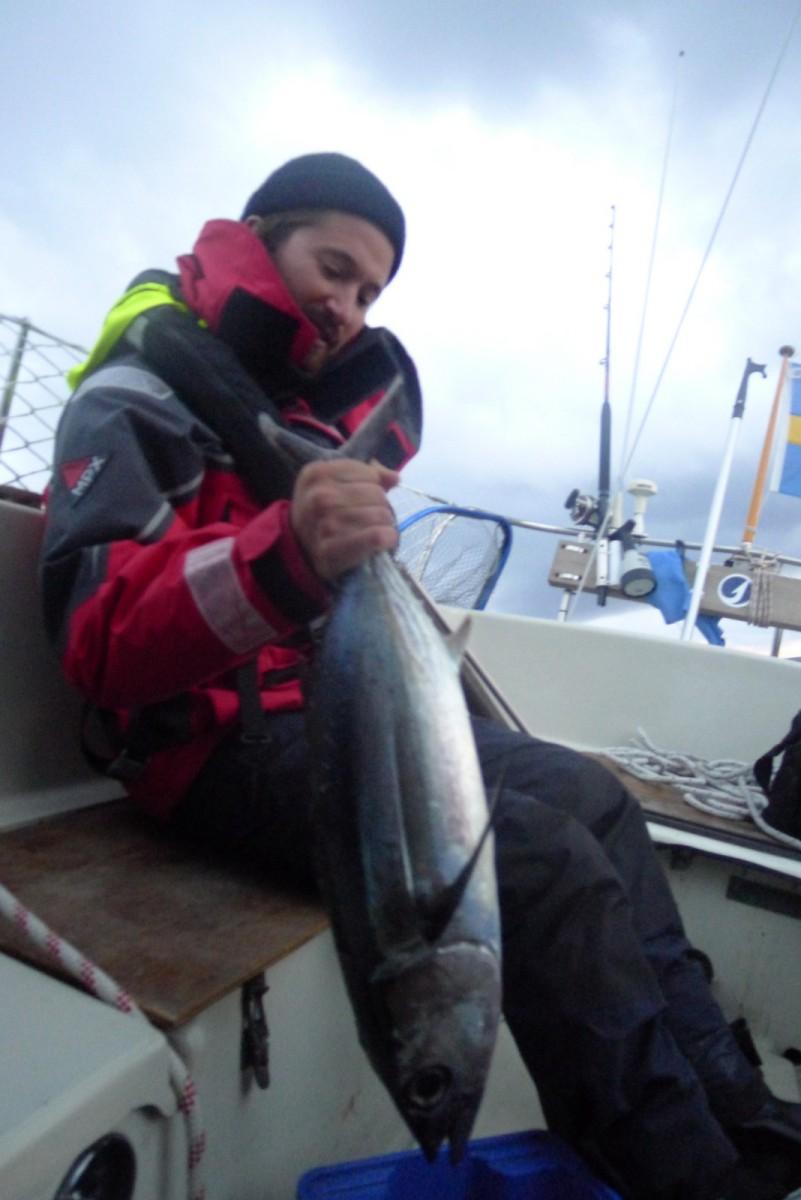 Bonito på 3,5 kg. Inte lätt att styra båt i 6+ knop, hålla upp fisk och se obesvärad ut...