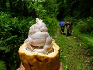 Kakao, omväxling efter all grapefrukt (som Calle och Andrej lassar ryggsäckarna med)